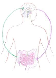 Kommunikation Gehirn und Darm
